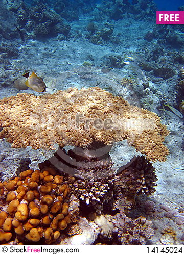 Free Coral Reef And Fish Stock Images - 14145024