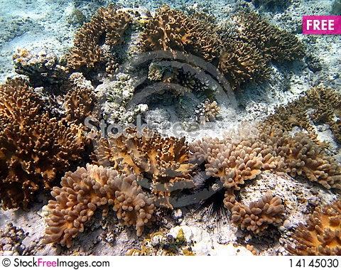 Free Yellow Coral Reef Stock Photo - 14145030