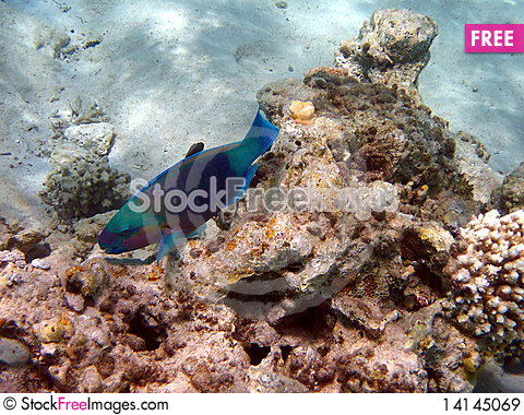 Free Coral Reef And Fish Royalty Free Stock Images - 14145069