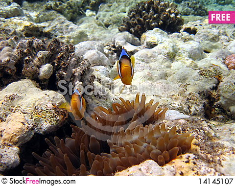 Free Coral Reef And Fish Royalty Free Stock Photography - 14145107