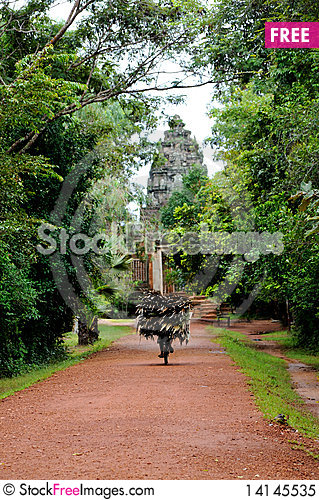 Free Road Path With Green Trees, Cambodia Royalty Free Stock Photo - 14145535