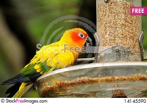 A colourful parrots Stock Photo