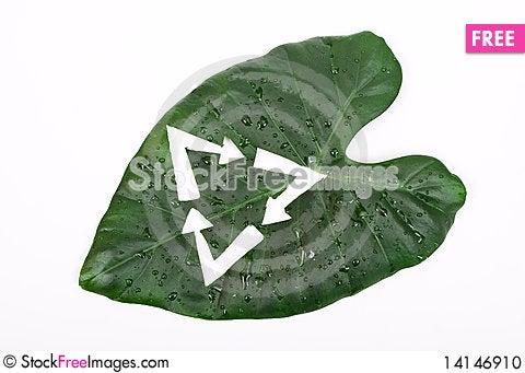 Free Green Leaf Stock Photo - 14146910