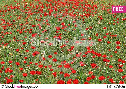 Free Poppy Background2 Royalty Free Stock Image - 14147606