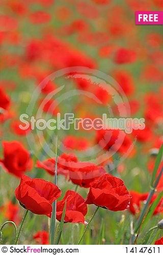 Free Poppy Background Stock Image - 14147611