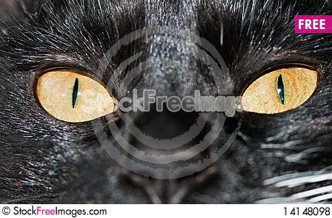 Free Cat Eyes Royalty Free Stock Photos - 14148098