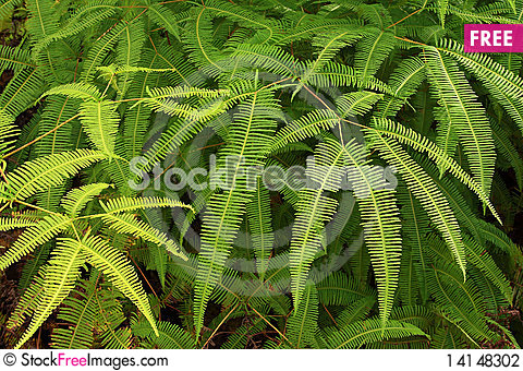 Free Ferns In Tropical Stock Photography - 14148302