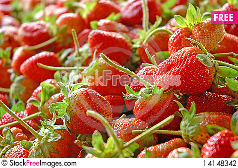 Free Group Of Strawberry Stock Photography - 14148342