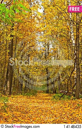 Free Path Royalty Free Stock Photo - 14148435
