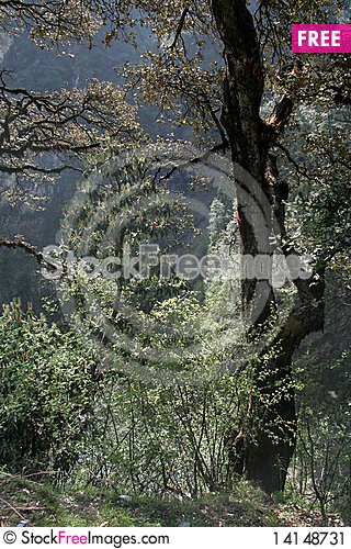 Free Forest Tree Stock Image - 14148731