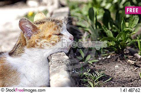 Free Portrait Of The Cat Stock Photography - 14148762