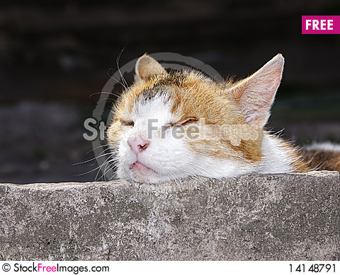 Free Portrait Of The Cat Stock Image - 14148791
