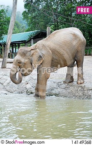 Free Elephant Royalty Free Stock Photos - 14149368