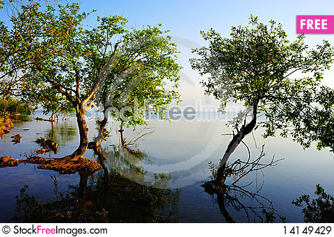 Free Tree In Water Royalty Free Stock Images - 14149429