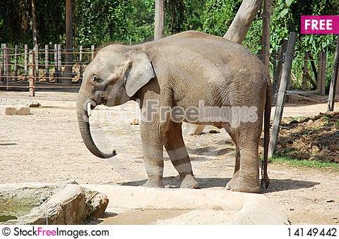 Free Elephant Stock Photography - 14149442