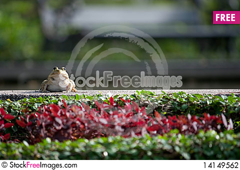 Free Frog Stock Photography - 14149562