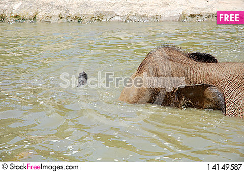 Free Elephant Royalty Free Stock Photography - 14149587