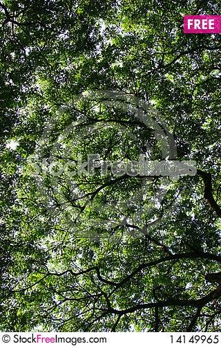 Free Big Tree Royalty Free Stock Photo - 14149965