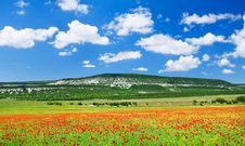 Free Poppy Field Stock Photo - 14141060