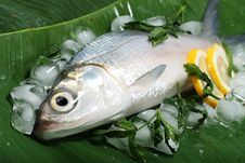Free Fresh Sea Bass On Banana Leaf Royalty Free Stock Images - 14141539