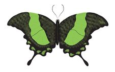 Free Green Swallowtail Butterfly Stock Photo - 14142520