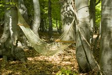 Free Hammock In The Woods Royalty Free Stock Photo - 14142915