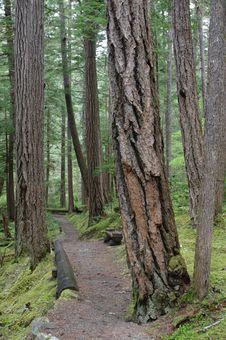 North Cascades National Park Royalty Free Stock Photos