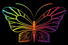 Free Tropical Butterfly Royalty Free Stock Images - 14144759