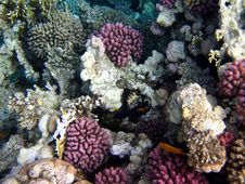 Free Coral Reef Stock Photos - 14144983