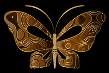 Free Tropical Butterfly Stock Images - 14144994