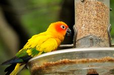 Free A Colourful Parrots Stock Photo - 14145590