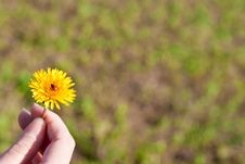 Dandelion In A Hand Royalty Free Stock Images