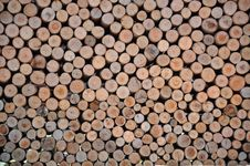 Free Wooden Cross Section Stock Image - 14147111