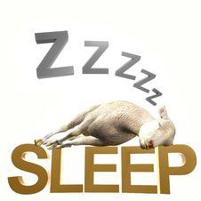 Sleeping Sheep Or Lamb Royalty Free Stock Photos