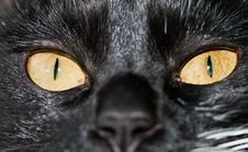 Free Cat Eyes Royalty Free Stock Photos - 14148098