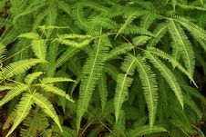 Ferns In Tropical Stock Photography