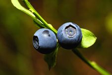 Free Two Berries Stock Images - 14148374