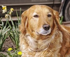 Free House Dog In Spring Flowers Stock Photos - 14148593