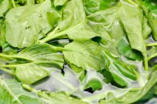 Free Green Leafy Vegetables In Water Stock Images - 14148724