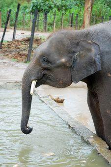 Black Elephant Stock Photo
