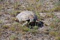 Free Tortoise Stock Photos - 14158183