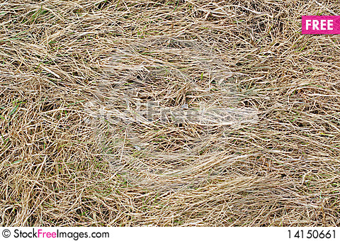 Free Dry Grass Background Stock Image - 14150661