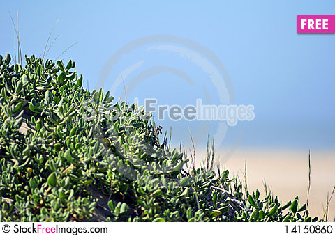 Free Bushes On The Beach Stock Photo - 14150860
