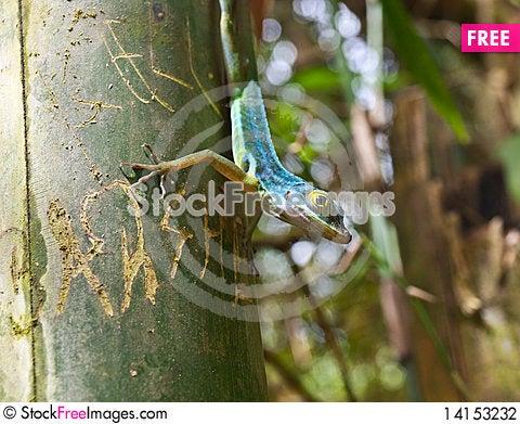 Free Green Lizard Alert On Tree Stock Photography - 14153232