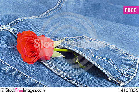 Free Jeans And Rose Royalty Free Stock Photo - 14153305