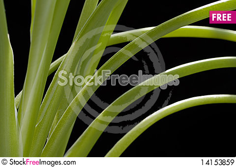 Free Closeup Of Plant Stems Royalty Free Stock Images - 14153859