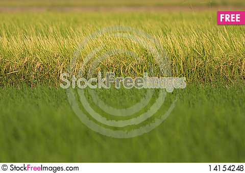 Free Two Tone Field Royalty Free Stock Photos - 14154248