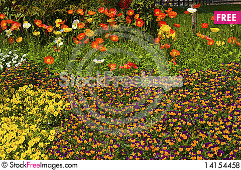 Free Flowerbed Royalty Free Stock Photos - 14154458