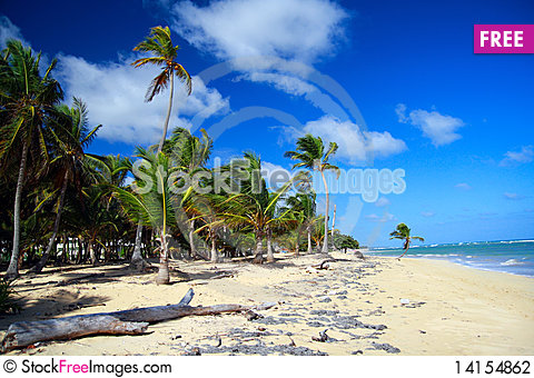 Free Palm Forest On Caribbean Beach With White Sand Stock Photography - 14154862
