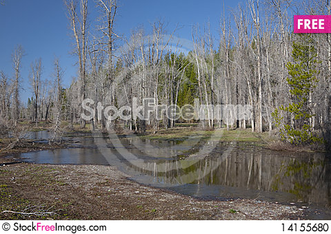 Free River In The Forest Stock Photo - 14155680